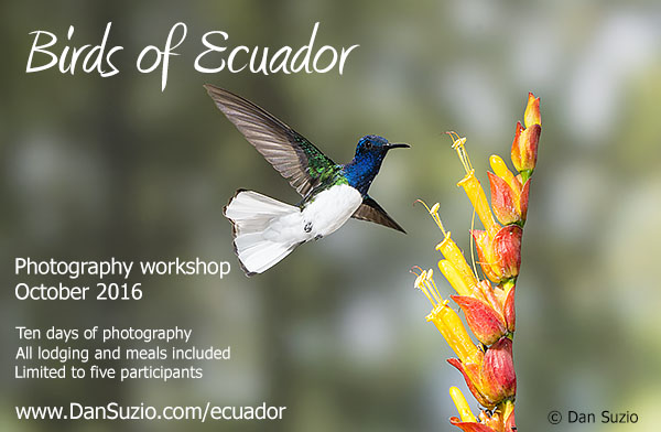 Birds of Ecuador Photography Workshop